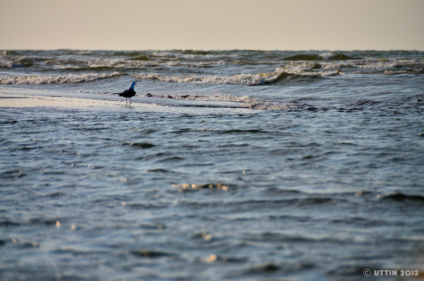 海が好きだ~! 波打ち際に仁王立ち波に向かってしきりに鳴いてる奴がいた腹が減ったと叫んで...