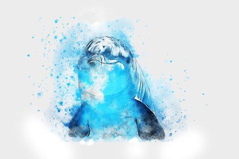 dolphin-2409511__480