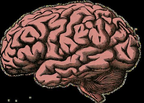 brain-512758__480