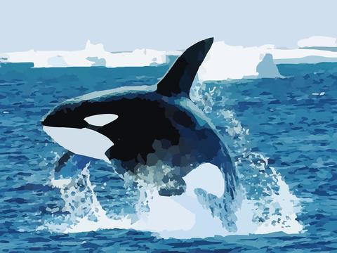 orca-295051_1280