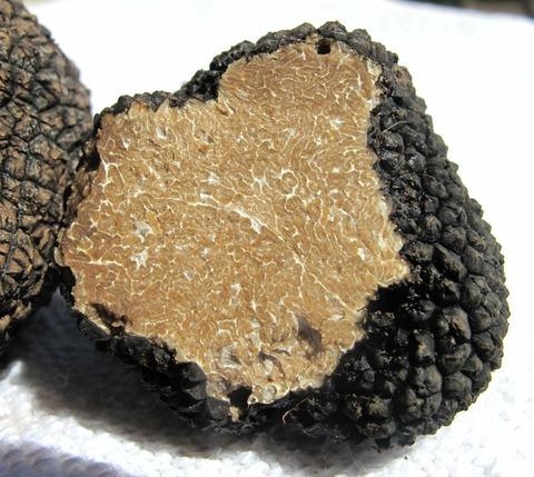 truffle-203031_1920