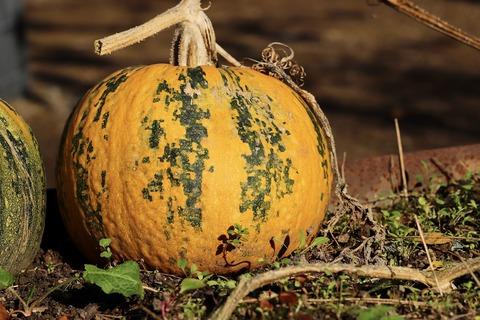 pumpkin-4591921_1920