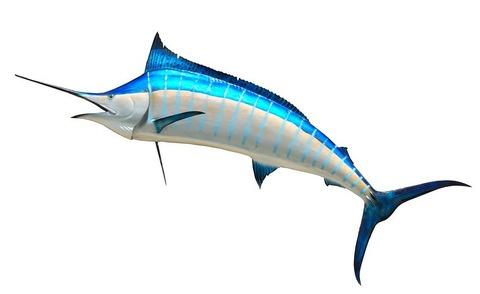 blue-marlin-1572564__480