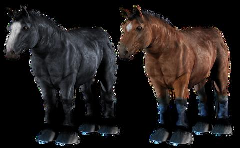 horse-3189777__480
