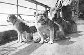 Dogs_onboard_the_Titanic