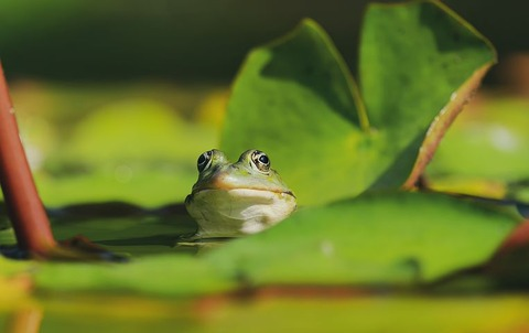 frog-4296784__480 (1)