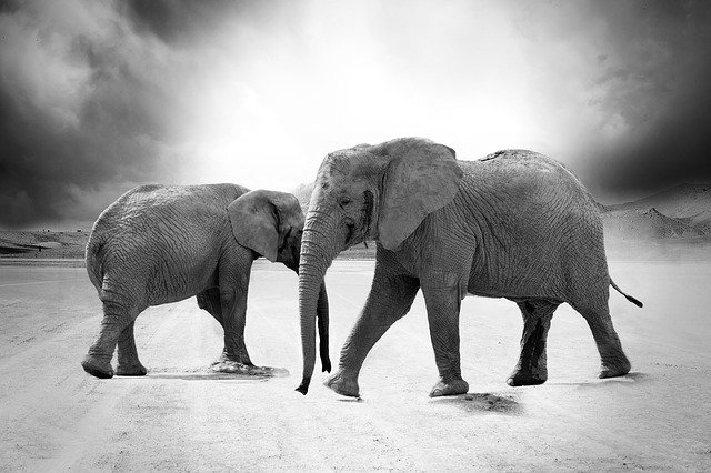 elephant-970456_640