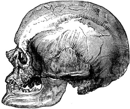 480px-Cro-Magnon-male-skull