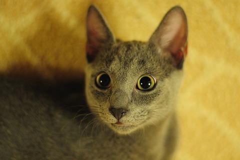 cat-770261__480