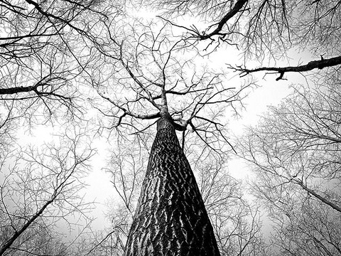 branches-238379__480