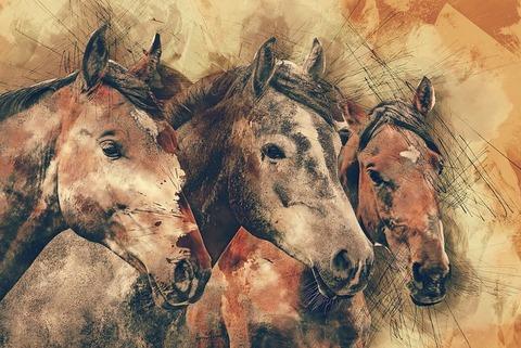 horses-1596288__480