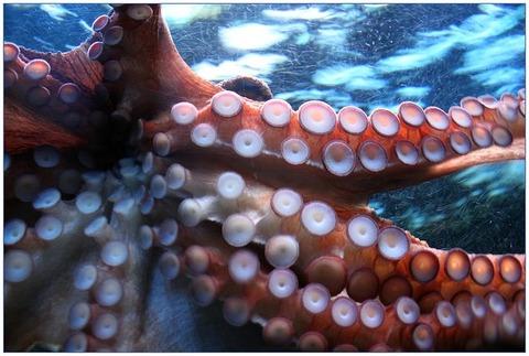 octopus-250101__480