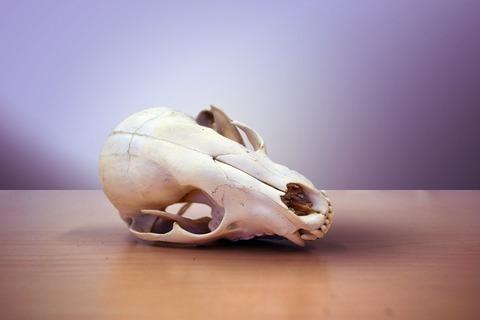 skull-1170771_1920