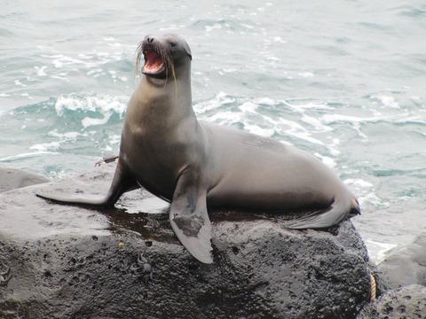 sea-lion-1646863_1920