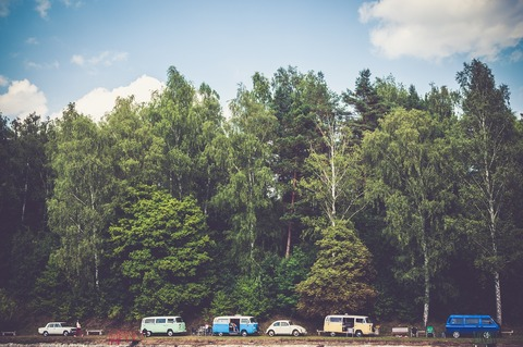 trees-1246045_1280