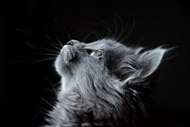 cat-4977436_640