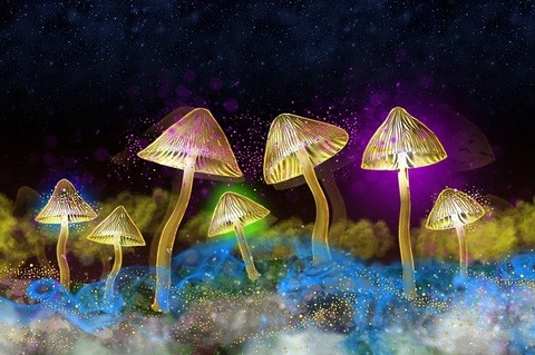 glowing-mushrooms-4807192_640 (1)