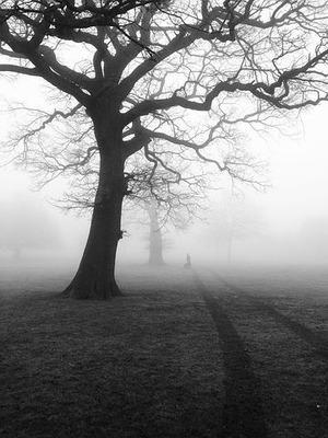 trees-450854__480