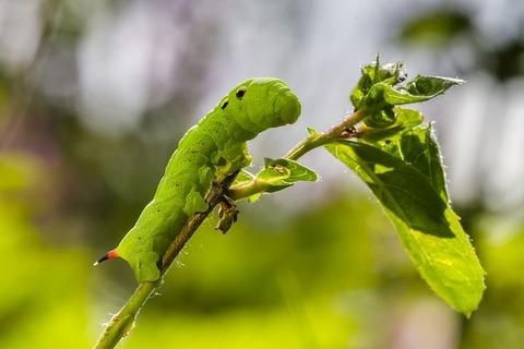 caterpillar-2523476__480