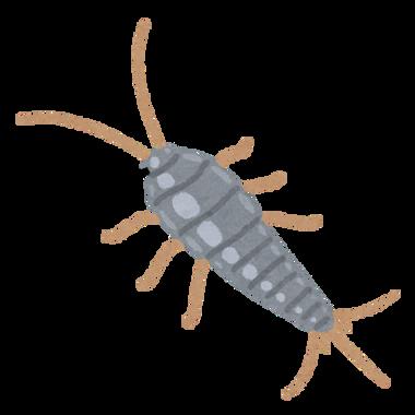 bug_shimi