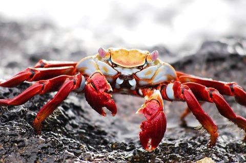 crab-2113968_640
