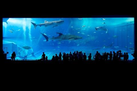 aquarium-725798_1280