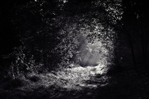 woods-690415__480