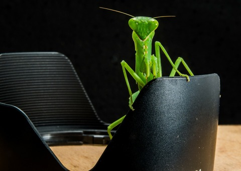 praying-mantis-190180_1920
