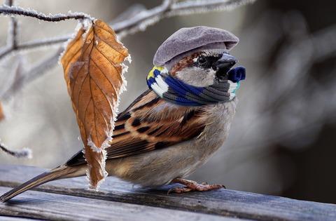 sparrow-2797009_1920