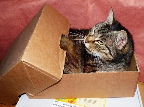 cat-1529520_1280