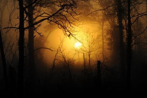 woods-183519__480