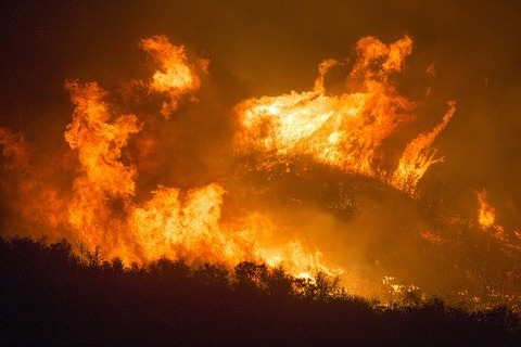 forest-fire-3905864_640