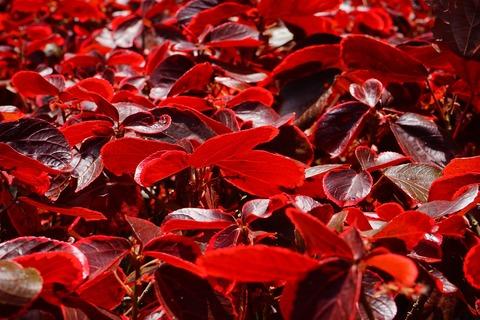 leaves-375563_1280