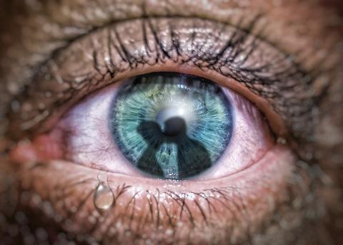 eye-4421552_1920