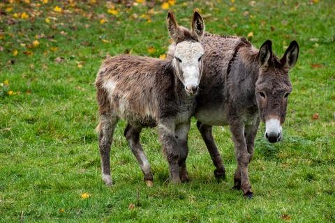 donkey-4603567_1920