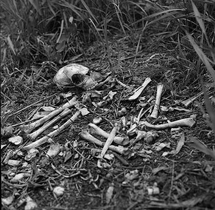 skull-1401665__480