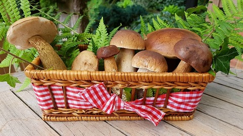mushrooms-2678385__480