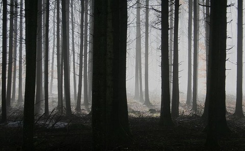 forest-1529055__480