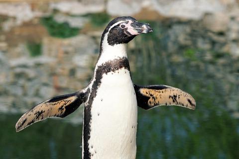 penguin-2204566_1920