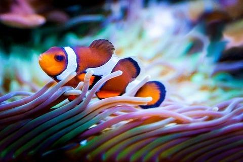 fish-959636_640