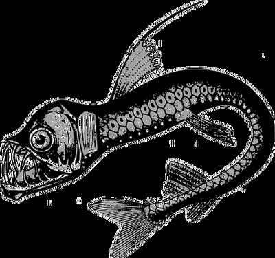 fish-158435__480