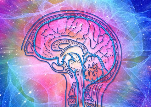 brain-4372153__480