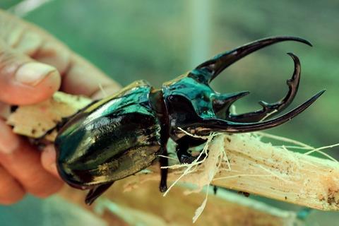 beetle-3433557_1280