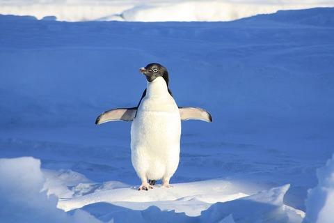 penguin-56101__480