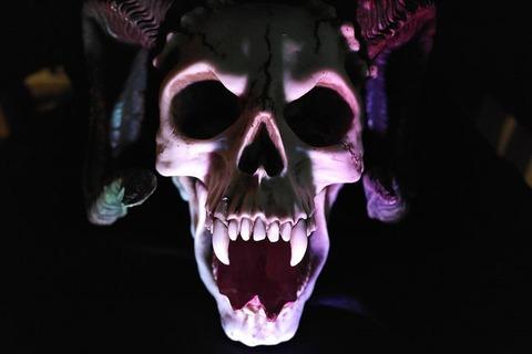 skull-535745__480