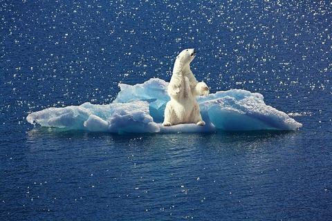 polar-bear-2199534__480