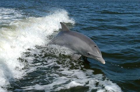 dolphin-386744__480