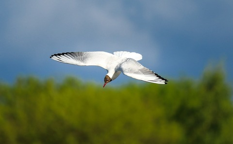 seagull-2360989_1920