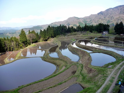うへ山の棚田_Rice_Terraces_of_Ueyama_in_Ojiro,_Kami_Town_in_May
