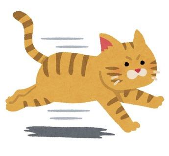 run_cat